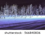 The Night Winter Forest