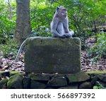 monkey sitting on a stone block ... | Shutterstock . vector #566897392