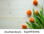 Fresh Orange Tulips On The...