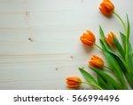 Fresh Orange Tulips On The...