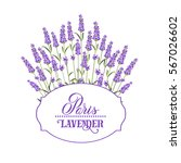 wreath of lavender flowers in... | Shutterstock .eps vector #567026602