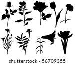 flower | Shutterstock .eps vector #56709355