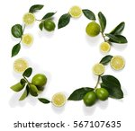 frame made of lime fruits with... | Shutterstock . vector #567107635
