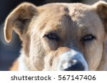 a stray dog on the nature   Shutterstock . vector #567147406