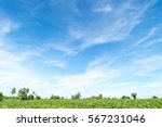 blue sky and beautiful cloud... | Shutterstock . vector #567231046