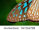 Wing Of Butterfly