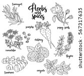 spices and herbs set to prepare ... | Shutterstock . vector #567317635