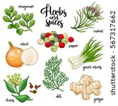 spices and herbs set to prepare ... | Shutterstock . vector #567317662