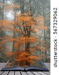 Small photo of Surreal alternate color fantasy Autumn Fall forest landscape conceptual image coming out of pages of book
