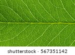 green leaves background. leaf... | Shutterstock . vector #567351142