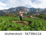 kundasang sabah malaysia   jan... | Shutterstock . vector #567386116