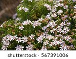 Cluster Of  Wild Flowers On Th...