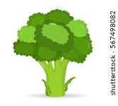artistic hand drawn broccoli...   Shutterstock .eps vector #567498082