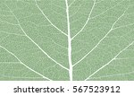 leaf with ribs | Shutterstock .eps vector #567523912