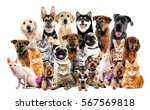 Stock photo group of cute pets on white background 567569818