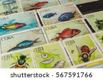stamp collecting. philatelic.... | Shutterstock . vector #567591766