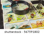stamp collecting. philatelic.... | Shutterstock . vector #567591802