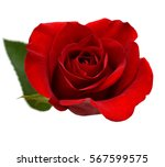 Stock photo a red rose day 567599575
