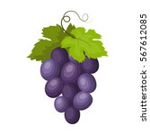 bunch of wine grapes icon in...   Shutterstock .eps vector #567612085