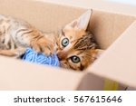 Stock photo portrait of a kitten with a ball from the box closeup 567615646