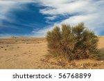 Wild Bushe In Bahrain Desert