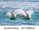 mother and baby dolphin in... | Shutterstock . vector #567788812