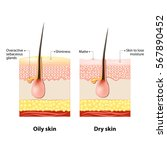 oily   dry skin. different.... | Shutterstock . vector #567890452