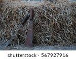 rusty machetes on rice straw | Shutterstock . vector #567927916