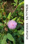 beautiful pink pollen | Shutterstock . vector #567979828