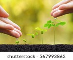 agriculture. plant seedling.... | Shutterstock . vector #567993862