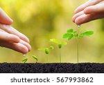 agriculture. plant seedling.... | Shutterstock . vector #567993862