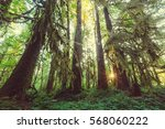 fabulous rain forest in olympic ... | Shutterstock . vector #568060222