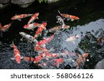 Beautiful Colored Fishes Like...