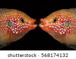 Familiarity Of The Two Fish....