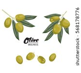 cartoon olives. ripe green... | Shutterstock .eps vector #568178776