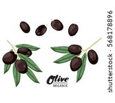 cartoon black olives. ripe... | Shutterstock .eps vector #568178896