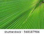 green palm tree leaf macro   Shutterstock . vector #568187986