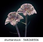Color Glass Flower Isolated On...