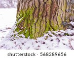 Small photo of Mosey tree trunk in frosty forest