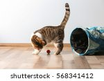 Stock photo cute funny cat playing at home 568341412