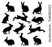 rabbit set  isolated on white... | Shutterstock .eps vector #568383322