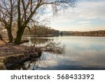 Nature Area With Bare Trees In...