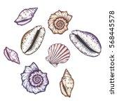 Hand Drawn Seashells. Isolated...