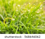 Water Dew On The Grass Leaf...