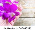 beautiful purple orchid flower... | Shutterstock . vector #568649392