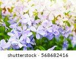 Summer Flowers Background Phot...