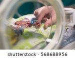 mother holding premature baby... | Shutterstock . vector #568688956