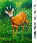painting of young deer in wild... | Shutterstock . vector #568733776
