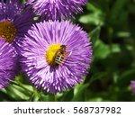 Bee On Purple Flower. Abstract...