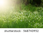 first spring white flowers... | Shutterstock . vector #568743952